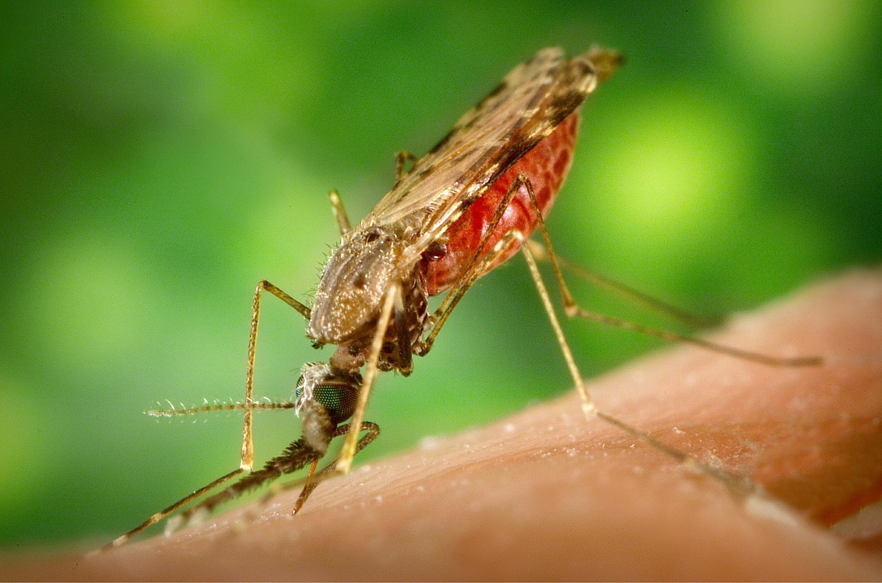 MalOMVax – Leading Project EU Malaria Fund